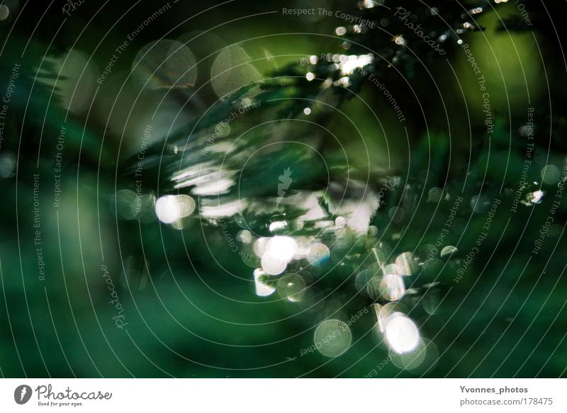 Nature Green Beautiful Tree Plant Environment Landscape Park Glittering Illuminate Transience Abstract Fir tree Detail Colour Back-light