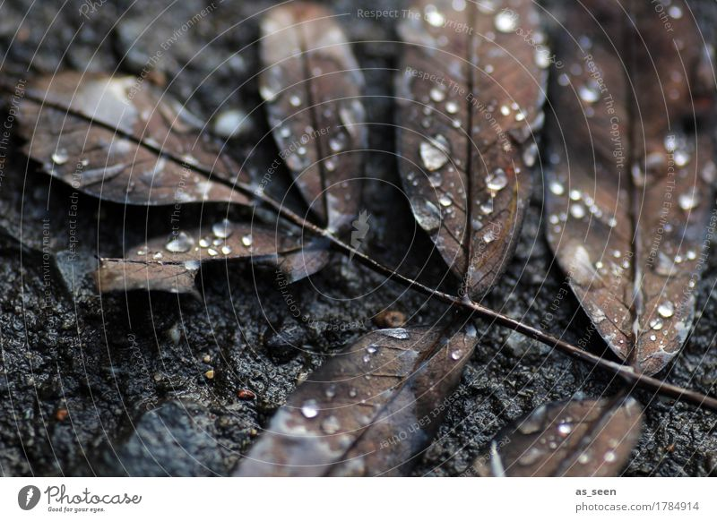 Nature Plant Water Leaf Winter Black Environment Autumn Natural Death Gray Brown Design Rain Lie Esthetic