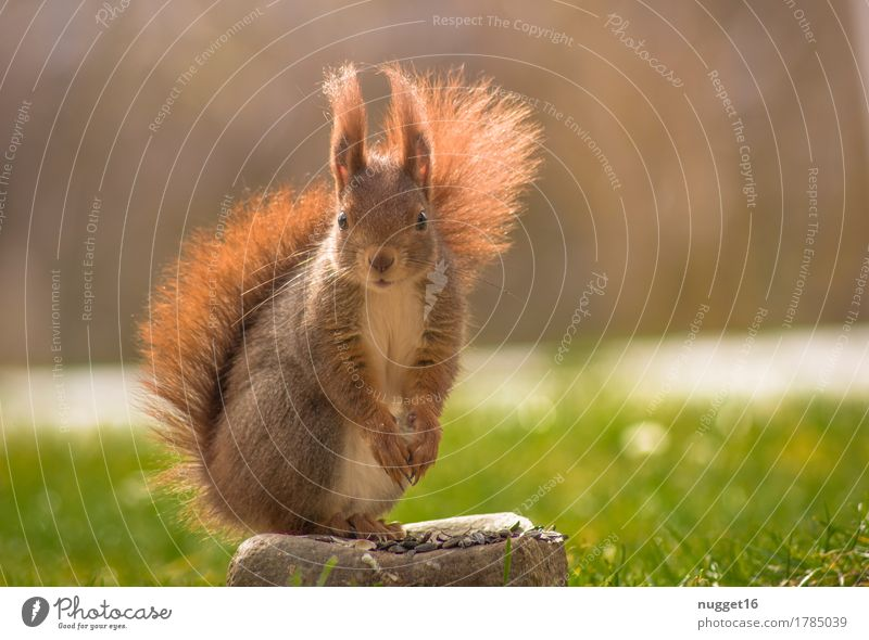 Is anyone coming? ;) Nature Animal Sunlight Autumn Grass Garden Meadow Wild animal Animal face Pelt Claw Paw 1 Observe To feed Sit Esthetic Friendliness Cuddly