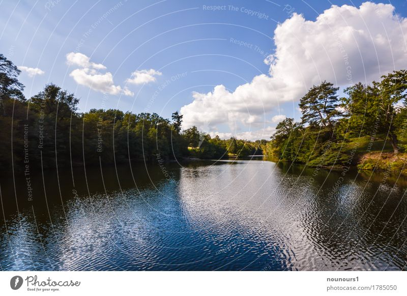 Summer at the lake Environment Nature Landscape Plant Water Sky Clouds Sunlight Beautiful weather Warmth Tree Bushes Body of water Blue Green White Colour photo