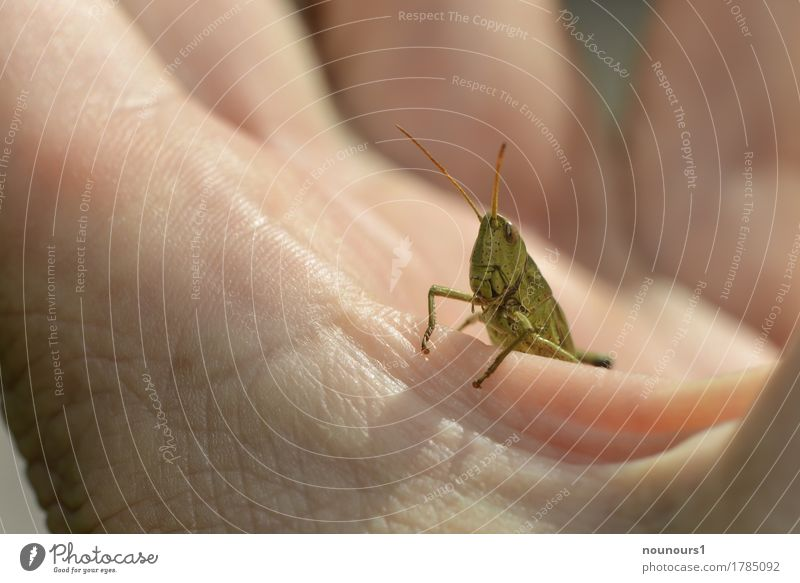 Good view Human being Skin Hand Fingers Animal Wild animal Animal face Locust 1 Crouch Sit Cool (slang) Beautiful Green Colour photo Multicoloured Exterior shot