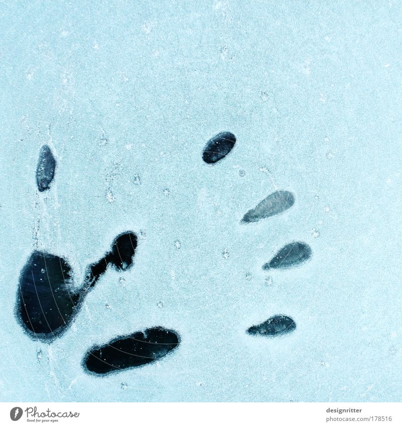 Ice Cold Hand Colour photo Exterior shot Close-up Detail Copy Space right Copy Space top Winter Snow Fingers Climate Weather Frost handprint Fingerprint Tracks