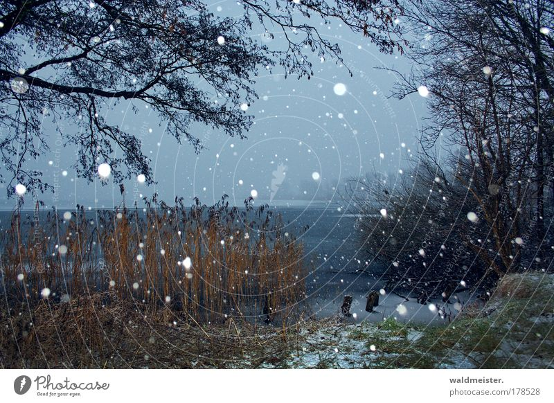 winter Colour photo Deserted Landscape Snow Snowfall Lakeside Anticipation Calm Peace Common Reed Tree Ice Peaceful Relaxation