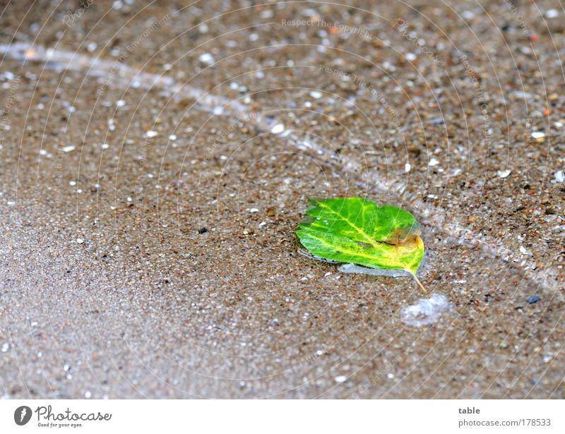 Nature Water Old Green Plant Summer Leaf Loneliness Relaxation Autumn Sand Waves Wet Change Lie Clean