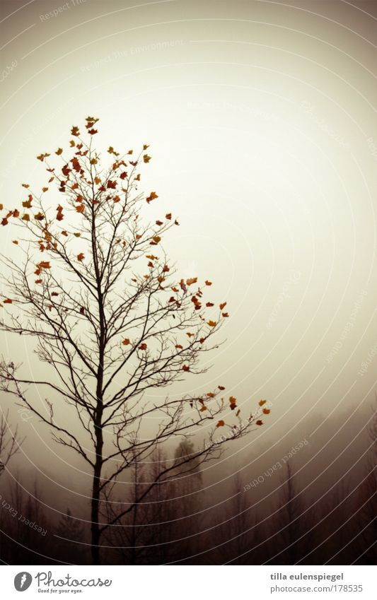 Nature Tree Leaf Loneliness Forest Dark Cold Autumn Wood Moody Fog Environment Transience Natural Hill Decline