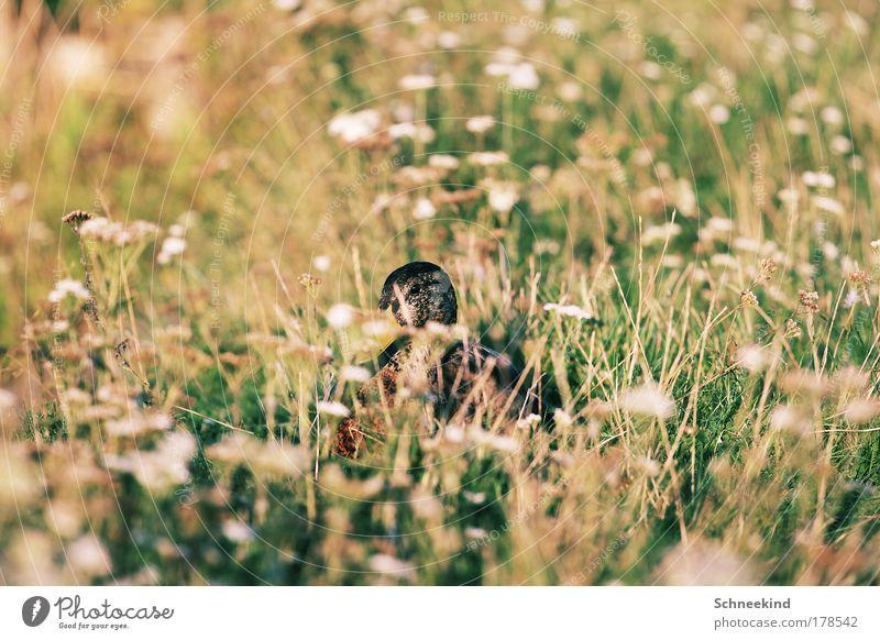 Nature Plant Flower Calm Animal Meadow Environment Grass Lake Park Bird Esthetic Wild animal Wing Observe Idyll