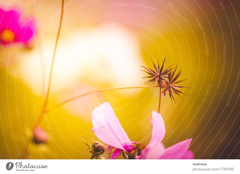 Nature City Plant Summer Green Beautiful Flower Environment Blossom Meadow Grass Style Together Pink Illuminate Elegant