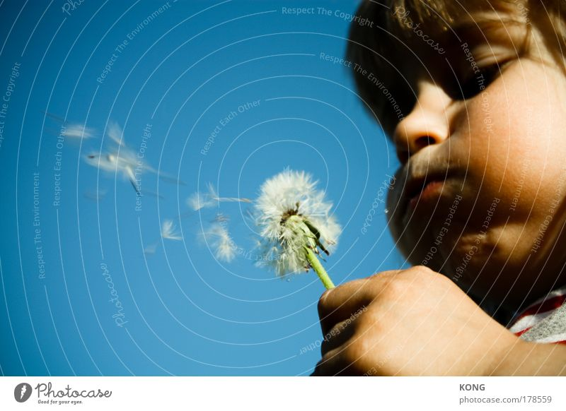 Child Plant Summer Flower Joy Illness Life Boy (child) Air Wind Infancy Flying Face Mouth Portrait photograph Free