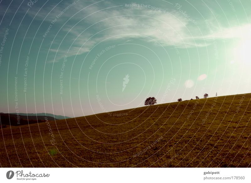 Fribourg Tuscany Colour photo Exterior shot Deserted Day Evening Contrast Silhouette Reflection Sunbeam Back-light Nature Landscape Plant Earth Sky Clouds
