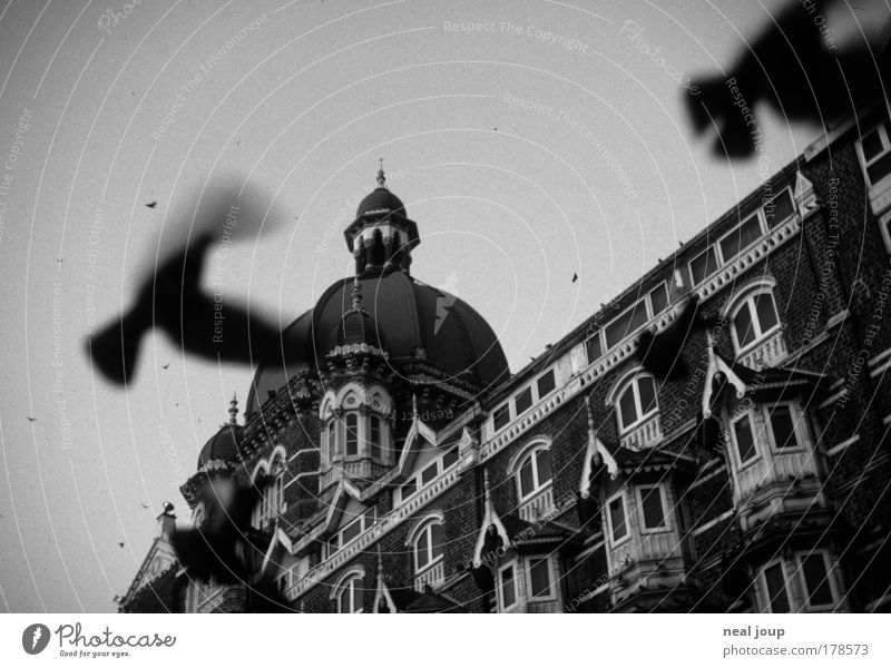 Facade Asia Mysterious Hotel India Wanderlust Pigeon Anticipation Tourist Attraction Black & white photo Bombay