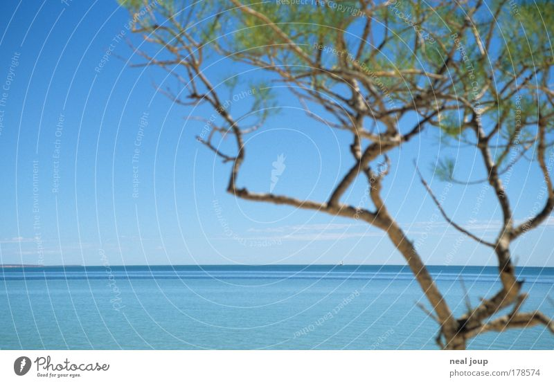 It could all be so simple ... Colour photo Exterior shot Deserted Horizon Beautiful weather Plant Ocean Monkey Mia Western Australia Exotic Free Infinity Blue
