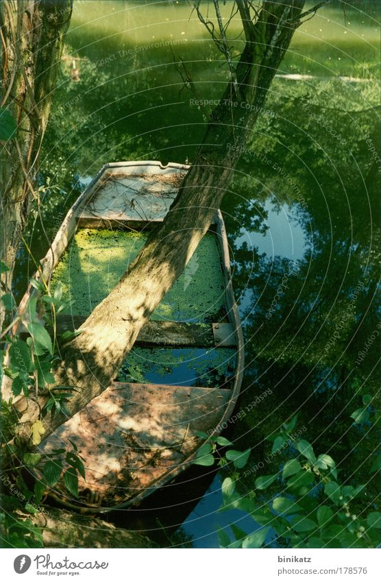 Nature Water Old Tree Green Blue Plant Summer Loneliness Emotions Wood Dream Sadness Landscape Watercraft Environment