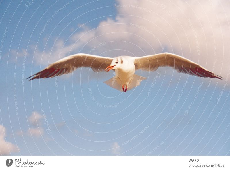 Sky Ocean Blue Clouds Bird Flying Curiosity Seagull North Sea St. Peter-Ording