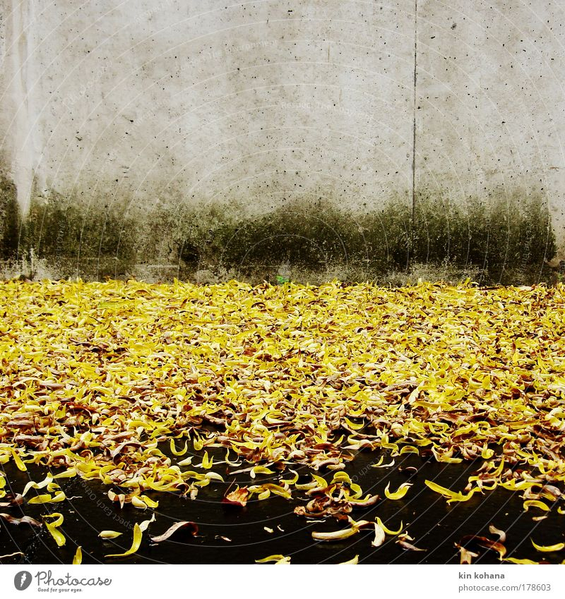 signal_color_02 Colour photo Exterior shot Deserted Copy Space top Day Autumn Leaf Wall (barrier) Wall (building) Gloomy Yellow Gold Grief Rain Concrete wall