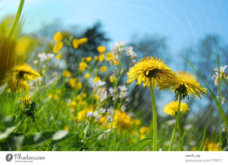 Nature Flower Plant Summer Joy Life Meadow Grass Happy Contentment Happiness Joie de vivre (Vitality) Beautiful weather Flower meadow Spring fever