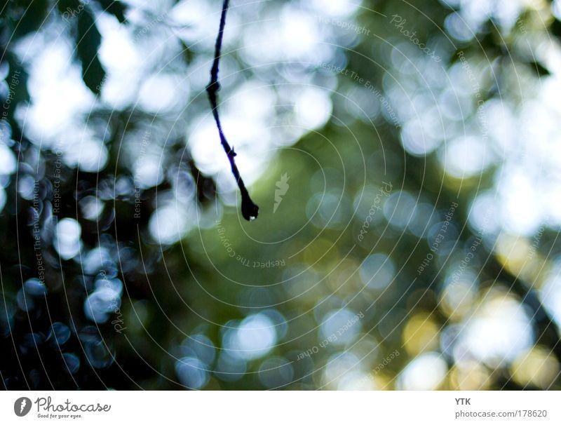Nature Sky Tree Sun Green Plant Summer Black Colour Forest Dark Cold Rain Air Moody Glittering