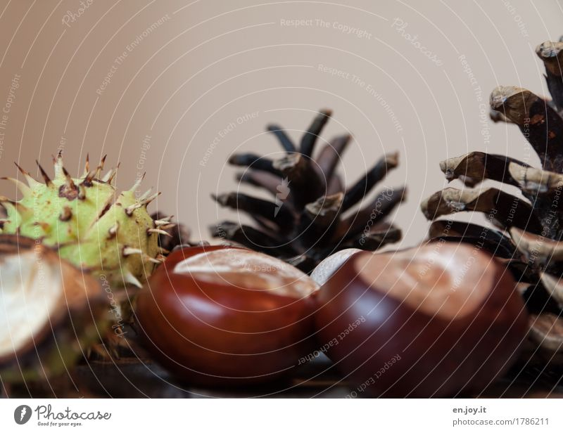 Autumn Handicraft Nature Plant Seed Chestnut tree Cone Tree fruit Brown Beginning Life Sustainability Survive Growth Thorn Colour photo Subdued colour