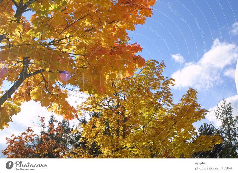 review Autumn Tree Sun Sky