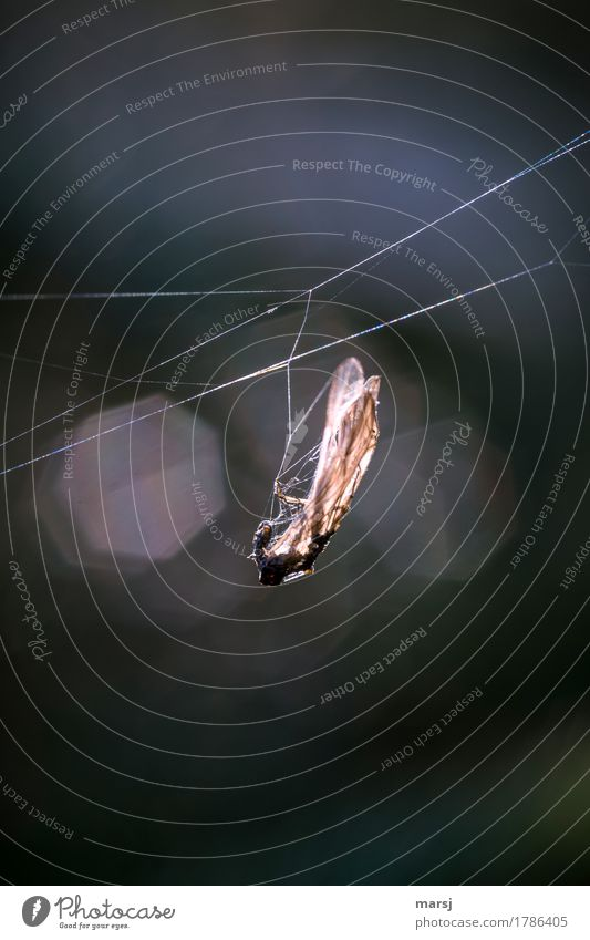 Animal Dark Death Authentic Thin Insect Hang Captured Supply Cobwebby Ambush X-rayed Cruel Macabre Furtive