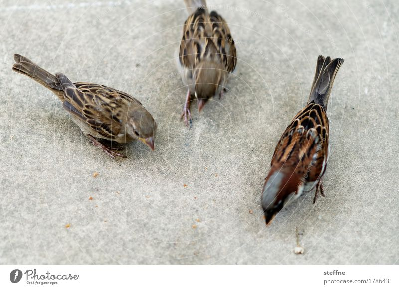 Nutrition Animal Bird Wild animal Feeding Sparrow Multiple 3