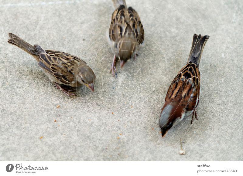 threesome Colour photo Exterior shot Animal portrait Wild animal Bird Sparrow 3 Feeding Nutrition