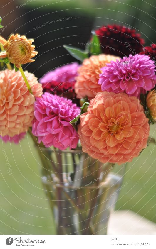 Nature Beautiful Flower Green Plant Red Joy Life Autumn Emotions Blossom Garden Park Contentment Feasts & Celebrations Pink