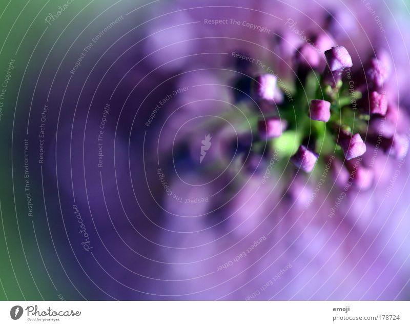Nature Plant Summer Blossom Spring Violet