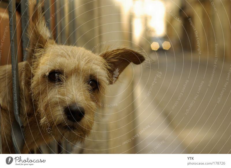 Dog Animal Street Warmth Friendship Gold Transport Observe Driving Curiosity Pelt Animal face Traffic infrastructure Watchfulness Testing & Control Pet