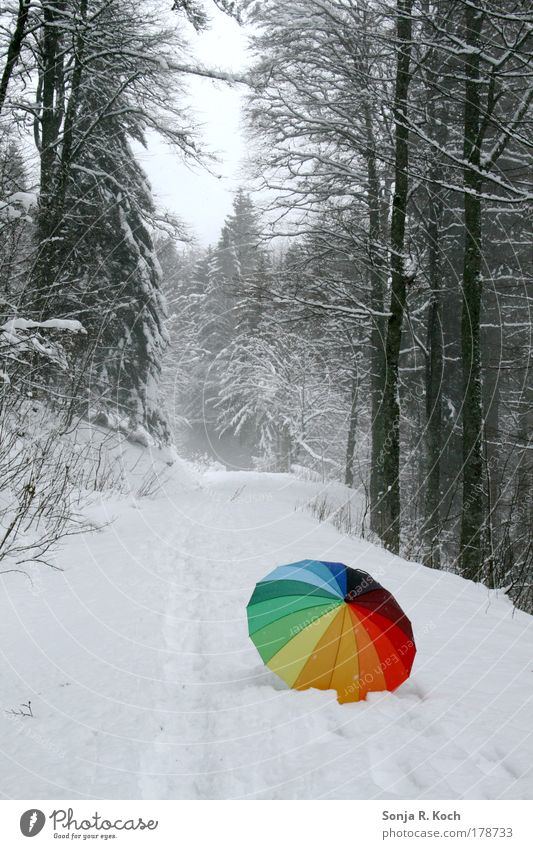 snow umbrella Colour photo Exterior shot Deserted Day Central perspective Trip Winter Snow Winter vacation Hiking Landscape Tree Forest Umbrella Moody Joy