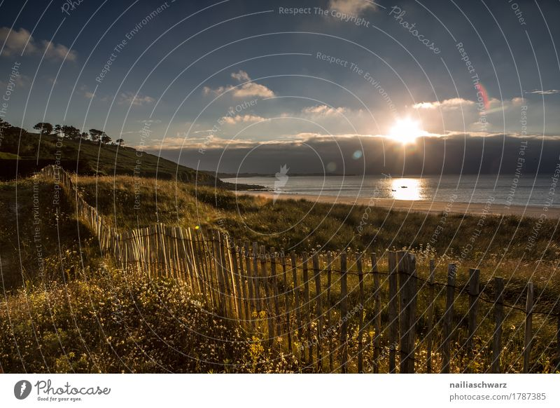 Sunset at the beach in Brittany Beach Ocean Landscape Horizon Summer Autumn Beautiful weather Plant Grass Coast Atlantic Ocean Fence Wooden fence Natural Moody