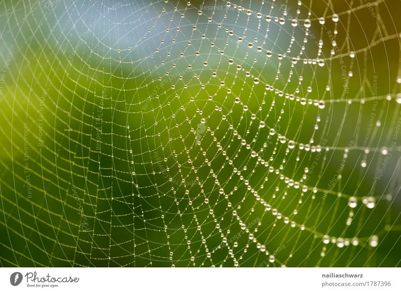 Dew drops on a spider's web Internet Environment Nature Spider's web Net Network Water Sign Ornament Line Drop Glittering Simple Fluid Cold Near Natural