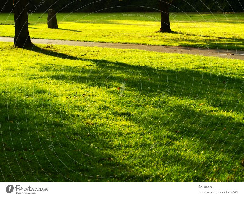 Nature Tree Summer Calm Colour Relaxation Meadow Freedom Landscape Environment Grass Lanes & trails Dream Warmth Moody Park