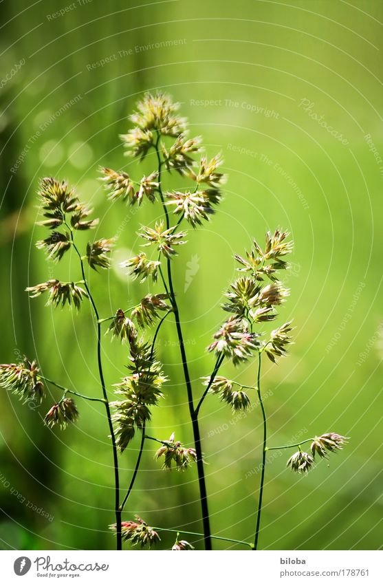 green green grass Colour photo Exterior shot Pattern Structures and shapes Deserted Copy Space right Copy Space top Day Light Sunlight Deep depth of field