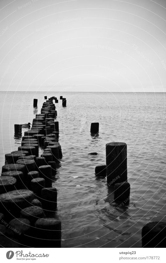 The old duck and the sea Black & white photo Exterior shot Deserted Copy Space top Landscape Water Horizon Winter Bad weather Baltic Sea Ocean Animal Bird 1