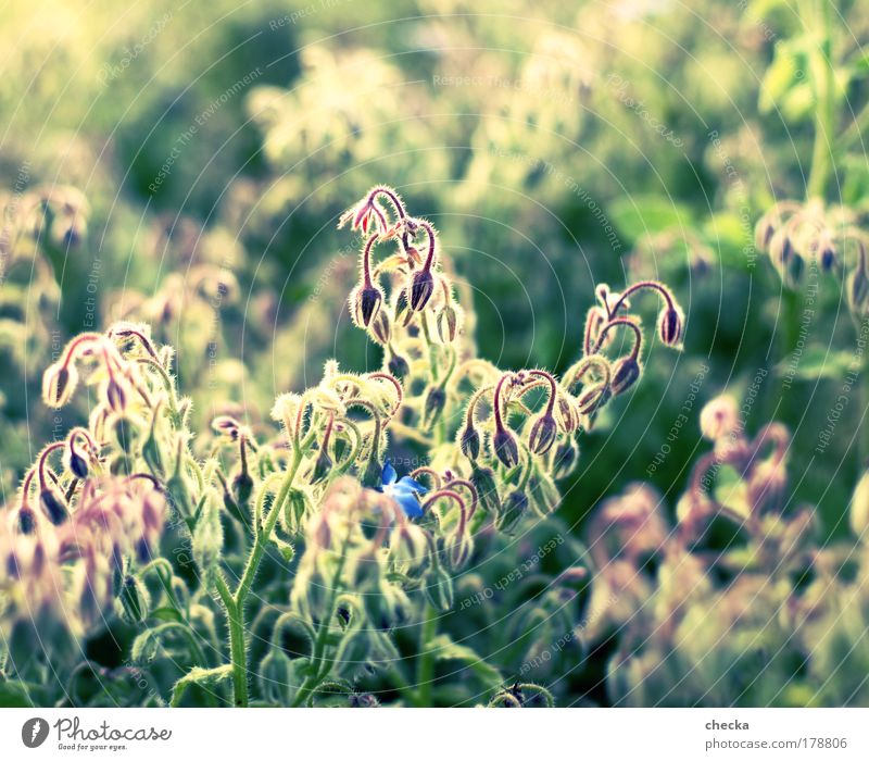 Nature Plant Summer Animal Life Autumn Meadow Blossom Grass Happy Park Landscape Contentment Moody Field Environment