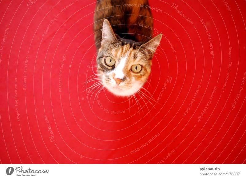 Red Eyes Animal Cat Ear Pelt Floor covering Pet Carpet Bird's-eye view Domestic cat Whisker Meow