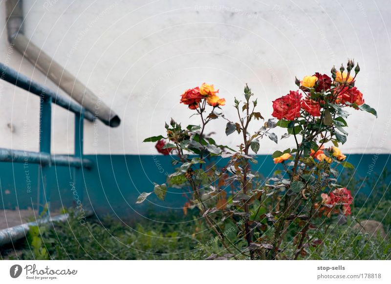 Nature Water Flower Blue Plant Red Joy Wall (building) Blossom Garden Wall (barrier) Environment Rose Growth Whimsical Handrail