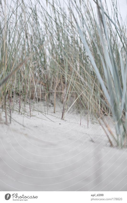 Nature Green Plant Summer Beach Vacation & Travel Ocean Environment Grass Gray Brown Earth Power Elegant Island Tourism