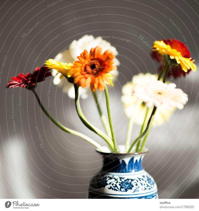 Beautiful Flower Birthday Bouquet Watchfulness Floristry Gerbera Flower vase