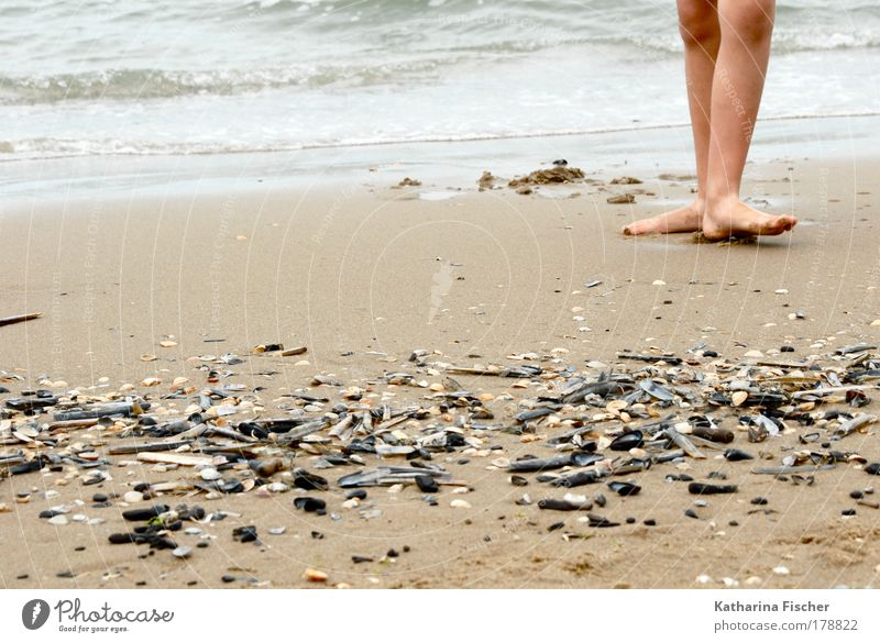 on the beach Life Legs Feet 1 Human being Environment Nature Earth Sand Water Summer Coast Beach Ocean Footprint Brown Black White Mussel Dance Day Undulating