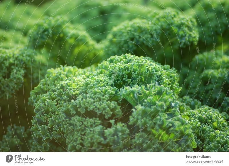 in the green Colour photo Exterior shot Close-up Deserted Day Sunlight Long shot Forward Plant Bushes Foliage plant Green