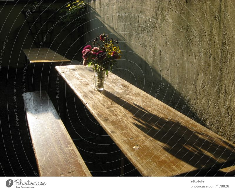 Calm Wall (building) Garden Wood Wall (barrier) Feasts & Celebrations Glass Concrete Decoration Bouquet