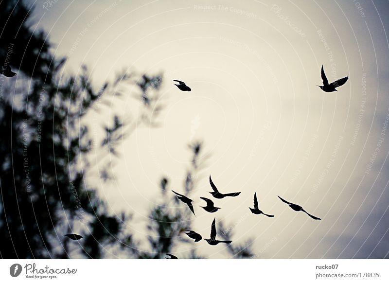 Nature Animal Sadness Autumn Death Bird Grief Longing Wanderlust Flock Homesickness Silhouette