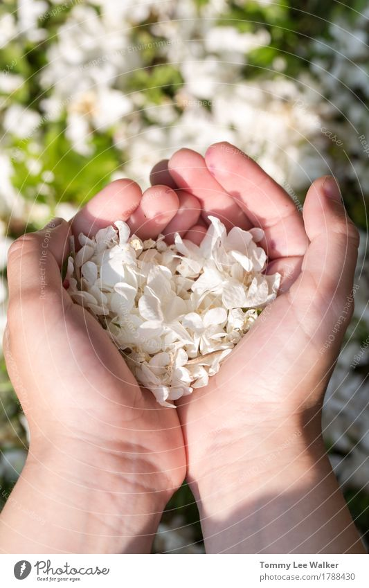 Love in hands Nature Green Beautiful White Flower Hand Joy Emotions Natural Grass Small Garden Together Friendship Park