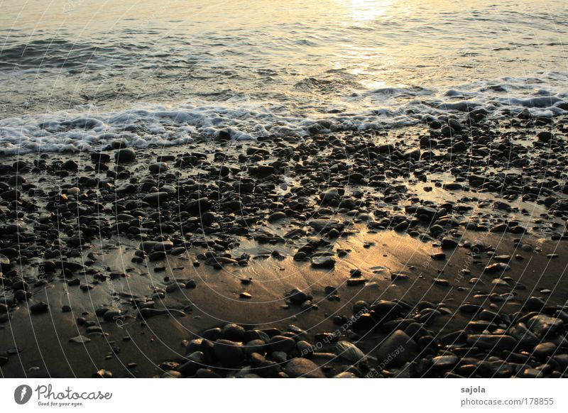 pebble on the beach Colour photo Exterior shot Morning Dawn Light Reflection Sunlight Environment Nature Elements Water Waves Coast Beach Ocean Wet Moody