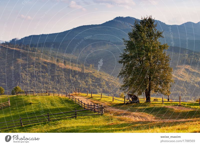 September rural scene in Carpathian mountains. Summer Mountain Environment Nature Landscape Earth Autumn Tree Grass Meadow Forest Hill Village Street Authentic