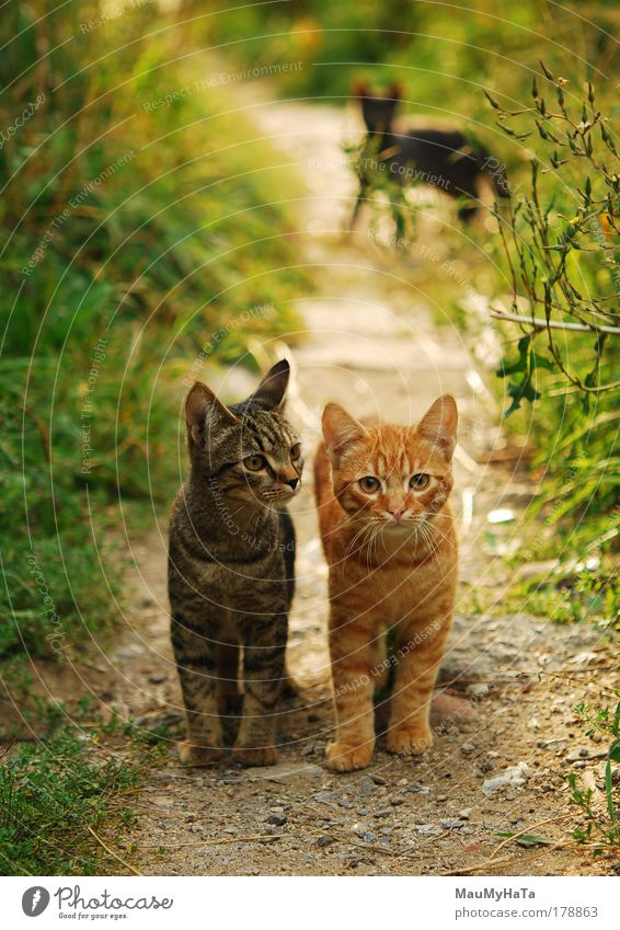 Two Cats Green Beautiful Sun Summer Animal Black Far-off places Street Eyes Life Garden Baby animal Morning Park Brown
