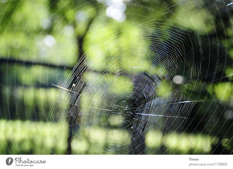 perfect Colour photo Exterior shot Morning Day Contrast Nature Green Black Beautiful Disciplined Endurance Esthetic Art Spider's web bike net Build Catch Woven
