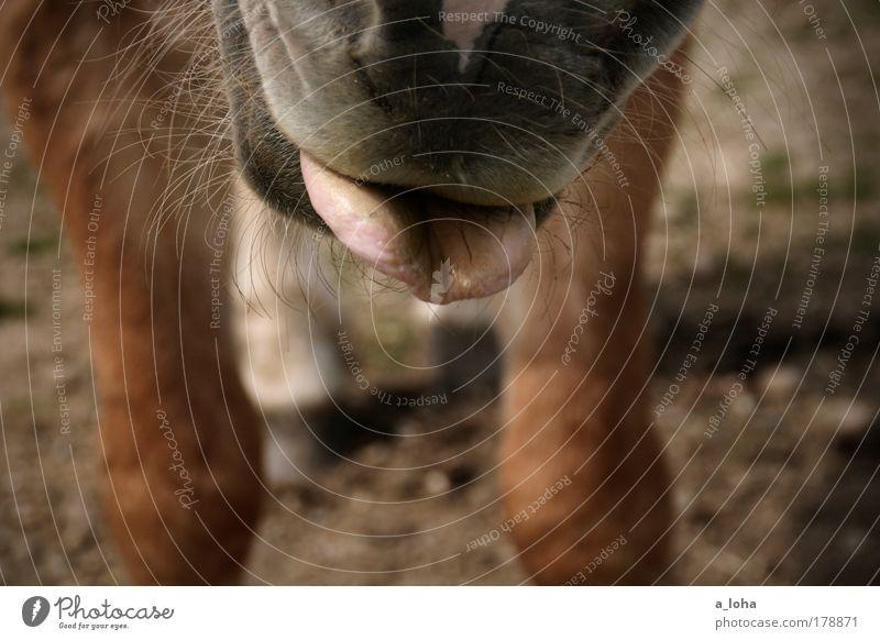 Joy Animal Meadow Movement Brown Wait Stand Horse Curiosity Pelt Appetite Brash Interest Pet Tongue Anticipation