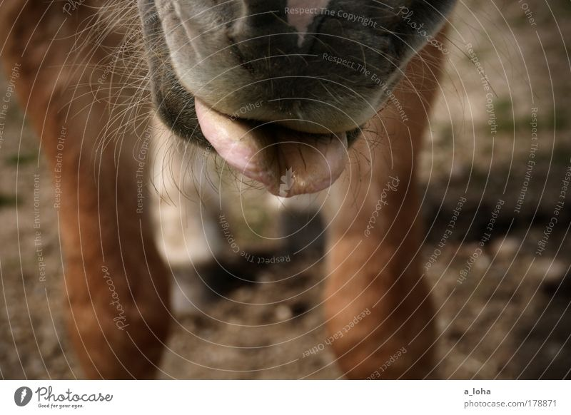 Joy Animal Meadow Movement Brown Wait Stand Horse Curiosity Pelt Appetite Brash Interest Pet Tongue Anticipation